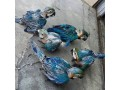 fullyweaned-vaccinated-and-trained-pet-parrots-birds-small-0