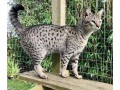 lovely-male-and-female-kittens-small-0