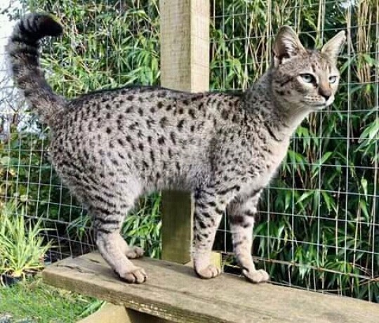 lovely-male-and-female-kittens-big-0