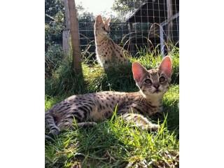 Family of kittens for you